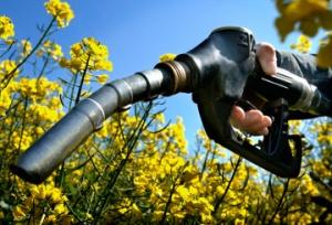 biofuel_pump_flowers