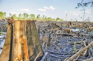 enviva_biomass_dogwood_alliance