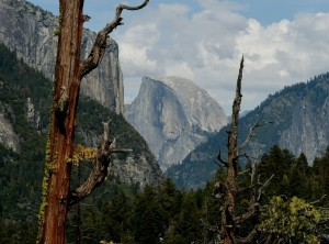 yosemite_dead_trees_biomass_markralston