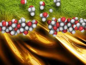 biofuel-enzyme-physorg