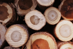 wood-for-biomass-anthropocene