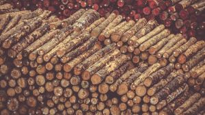 woody biomass undark
