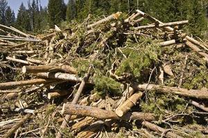 ForestLogsSmall_Biomass Magazine