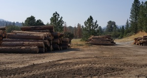 Log-decks-at-North-Fork-mill-site-Biomass-Plant