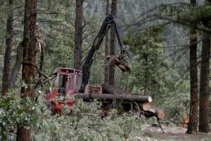 biomass-logging_jake-bacon_arizona-daily-sun